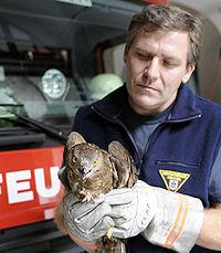 Gerettet: Der Bussard in den Händen der Feuerwehr. Foto: BF München