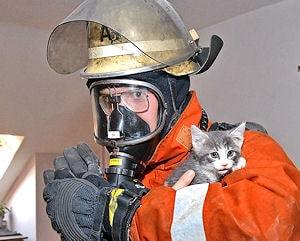 Gerettet, aber noch mit skeptischem Blick: Das Katzenbaby auf dem Arm eines Atemschutzgeräteträgers. Foto: Konjer