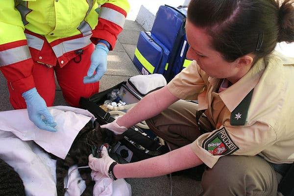 Sauerstoffspende für eine Katze: Rettungsdienst und Polizei bemühen sich nach einem Brand in Bochum um das Leben des Tieres. Foto: Ulli Weber/Polizei