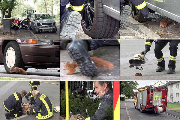 Ungewöhnliche Tierrettung in Dortmund: Die Feuerwehr jagt ein verletztes Eichhörnchen und kann es schließlich per Feuerwehrhelm einfangen. Foto: Magda
