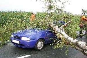 Ein vom Unwetter umgestürzter Baum ist bei Tostedt auf einen fahrenden Kleinwagen gestürzt. (Foto: Feuerwehr Tostedt)