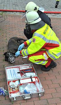 Hund gerettet. Foto: Holger Bauer