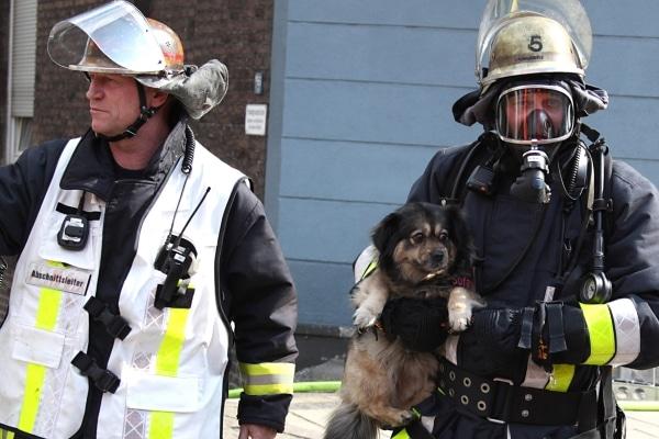 Neben sechs Menschen und einer Katze rettet die Feuerwehr Essen auch einen Hund aus einem verqualmten Haus. Foto: Feuerwehr Essen