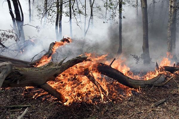 Waldbrand bei Nordhorn im Jahr 2011. Foto: Schmalfuß/Feuerwehr Nordhorn