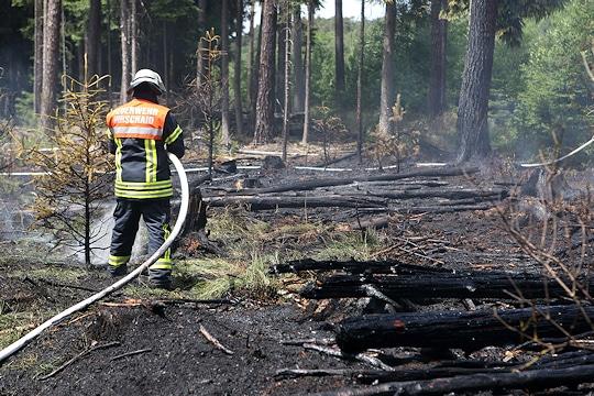 Waldbrand an der A 73 bei Strullendorf. Foto: News5