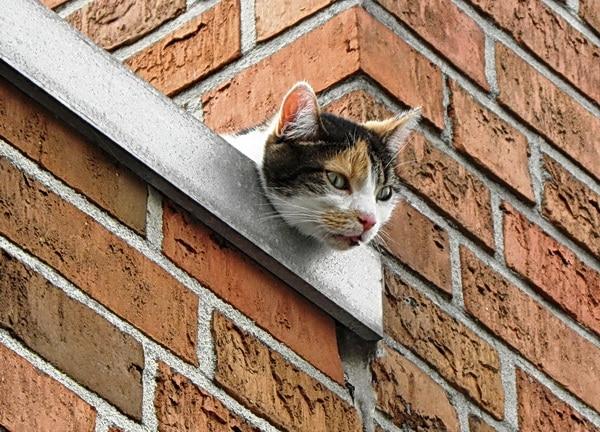 Nach dem Sturz aus dem vierten Obergeschoss blieb eine Katze in Nordhorn auf einem Vordach liegen. Feuerwehrleute retteten den verletzten Vierbeiner. Foto: Förderverein der FF Nordhorn