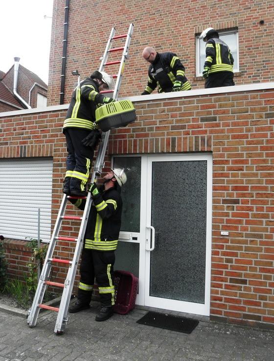 In einer Transportbox wird die Katze vom Dach getragen. Foto: Förderverein der FF Nordhorn
