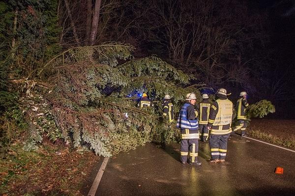 Sturmschaden: Umgestürzter Baum bei Affalterbach auf der K 1674 im Kreis Ludwigsburg. Foto: 7aktuell.de/Specht