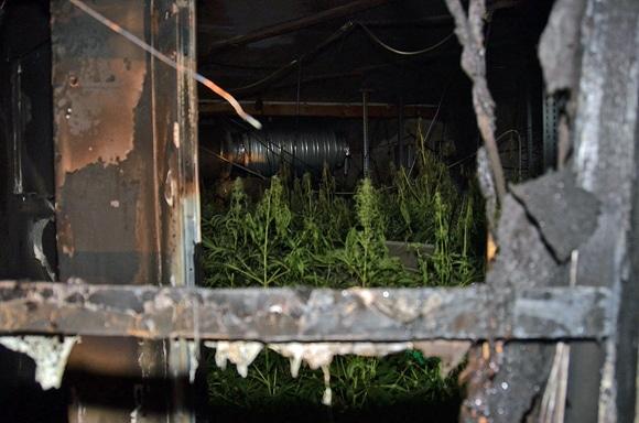 Blick auf einen teil des Brandraumes und der Plantage. Foto: MA 68 Lichtbildstelle