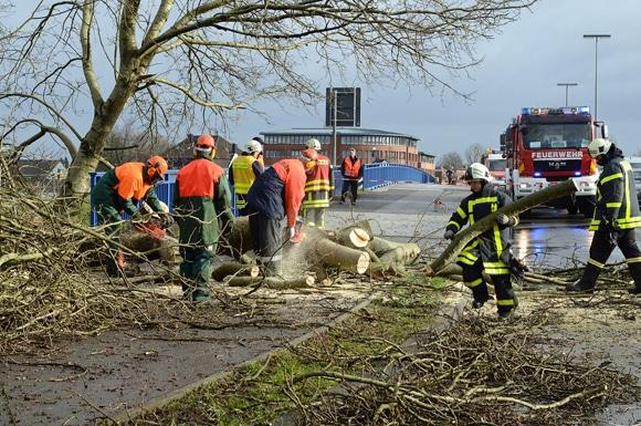 Kräfte der Feuerwehr bei Sägearbeiten auf der B224. Foto: Bludau