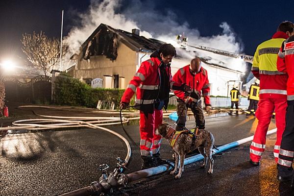 Einsatz von Rettungshunden zur Suche im Umkreis des Brandobjektes. Foto: noltemedia