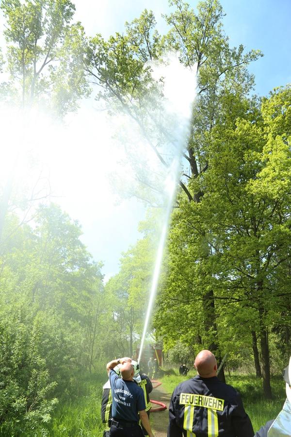 Mittels Wasser wird die Katze aus dem Baum geholt. Foto: Rocci Klein