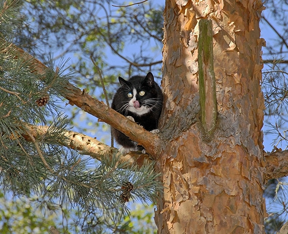 Zuständig bei der Tierrettung. Foto: Hettler