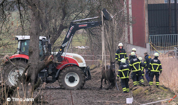 11032016_Tierrettung_Altengamme