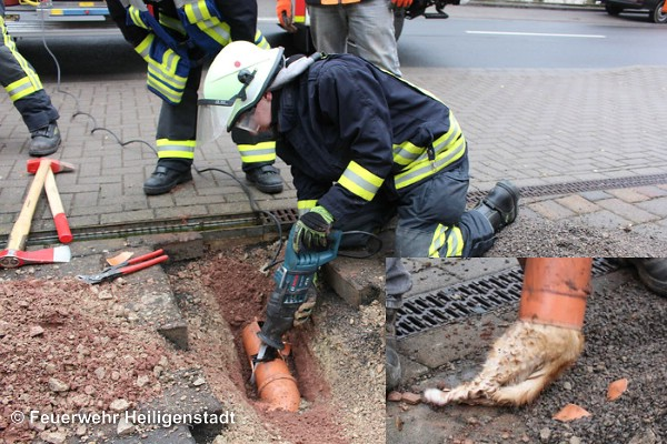 Tierrettung-Heiligenstadt-21-03-2016