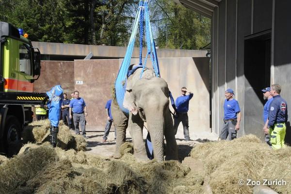 Elefanten-Rettung-Zürich-21-04-2016xx