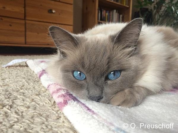Symbolfoto: Katze. Foto: Preuschoff
