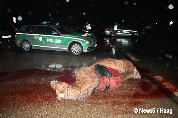 Ein tragischer Unfall ereignete sich am Dienstagabend (15.11.016) auf der B13 zwischen Ansbach und Lehrberg. Zwei Mädchen wollten auf Höhe der Abzweigung Wasserzell mit ihrem Pferd die Bundesstraße überqueren. Dabei übersahen sie einen herannahenden Pkw, der aus Richtung Ansbach nach Lehrberg fuhr. Der Fahrer des roten Audi konnte nach ersten Informationen nicht mehr rechtzeitig bremsen und erwischte das Pferd frontal. Die zwei wohl jugendlichen Mädchen flogen zusammen mit dem Pferd durch die Luft und landeten unsanft auf der Fahrbahn. Dabei erlitten beide schwere Verletzungen. Ob sich der Fahrer des Audi ebenfalls verletzte ist noch unklar. Das Pferd wurde bei dem Aufprall so schwer verletzt, dass ein Tierarzt zur Unglücksstelle kommen musst, um es noch direkt vor Ort einzuschläfern. Die Feuerwehr musste sich nicht nur um die Absicherung der Unfallstelle im Feierabendverkehr kümmern, sondern auch um das Abbinden auslaufender Betriebsstoffe und die Reinigung der Straße. Die Höhe des entstandenen Sachschadens ist aktuell nicht bekannt. Foto: NEWS5 / Haag