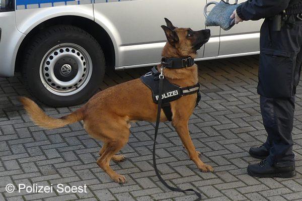 Symbolfoto_Polizeihund