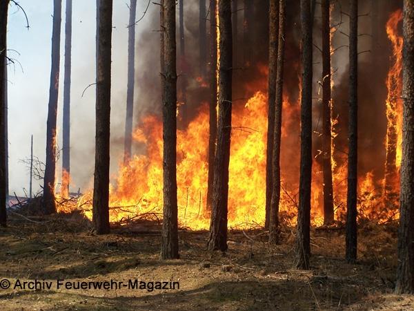 Symbolbild eines Waldbrandes. Foto: Archiv Feuerwehr-Magazin