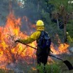 Feuerwehrmann vor Waldbrand