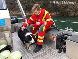 Die FF Bad Säcklingen und Wallbach kommen einem Hund zu Hilfe. Der Vierbeiner war zuvor in den Rhein gestürzt.