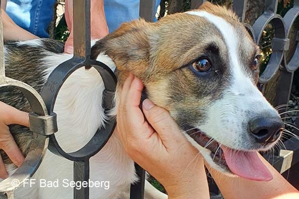 Tierrettung: Hund steckt fest